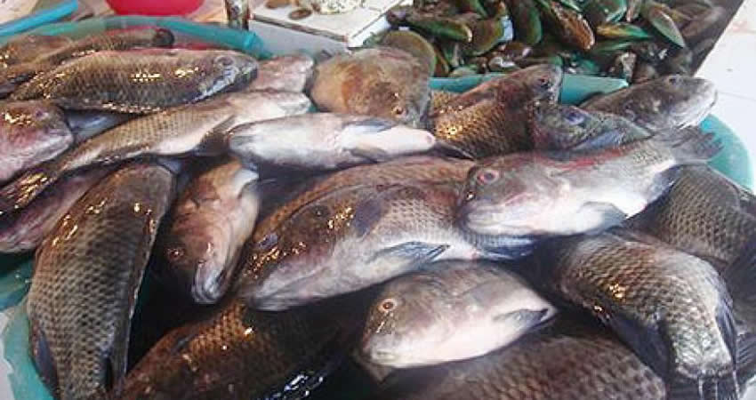 Fish Cluster