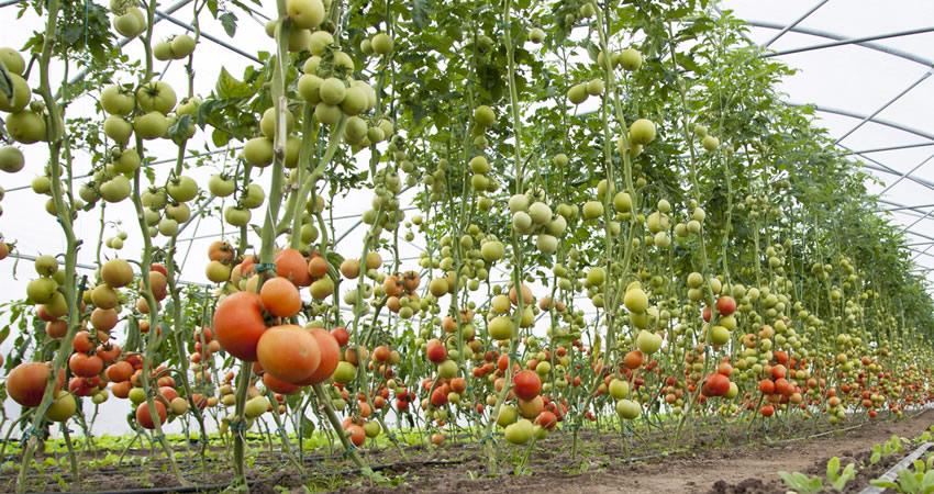 Horticulture Cluster